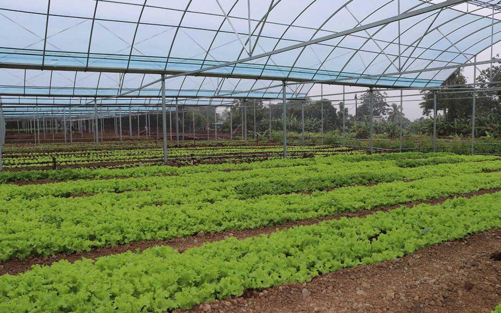 ba farms greenhouse